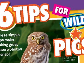 6 Tips for Wild Pics