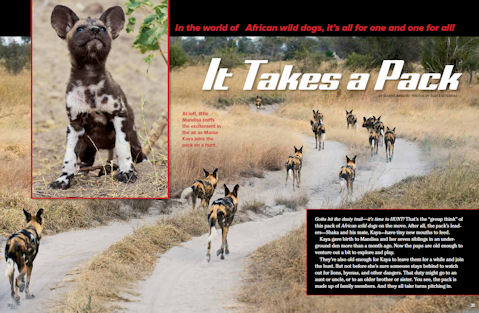 wild dog spread