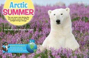 Arctic spread 2
