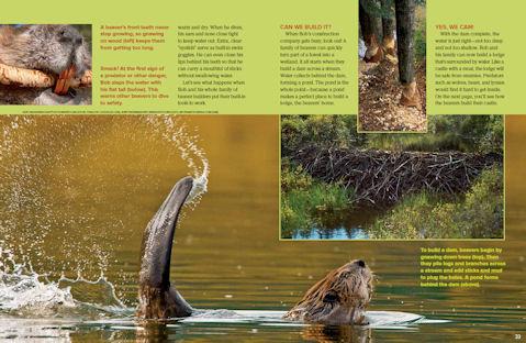 beaver spread 2