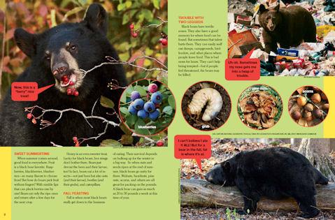 black bear spread2