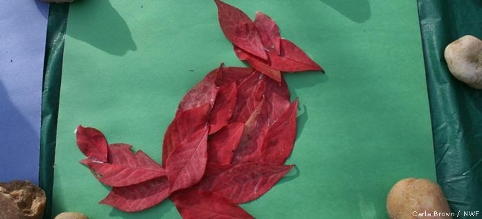 cardinal leaf