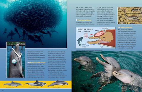 dolphins spread 3