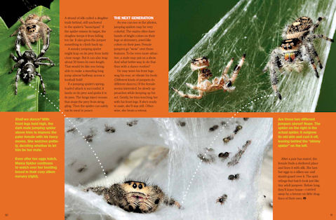 jumping spider spread 3
