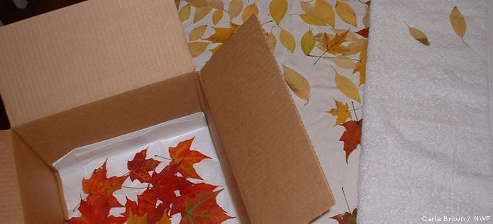 leaf storage