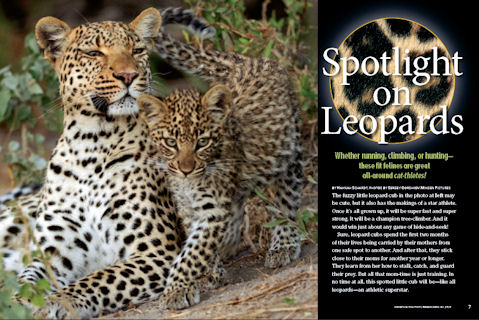 leopards spread 1