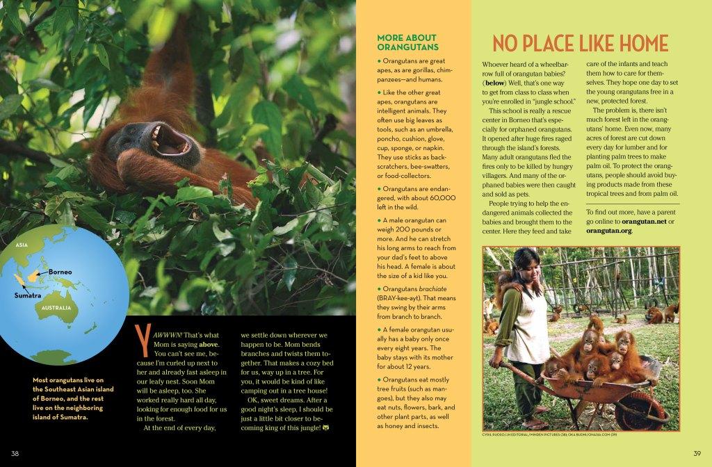 Orangutans-spread-4
