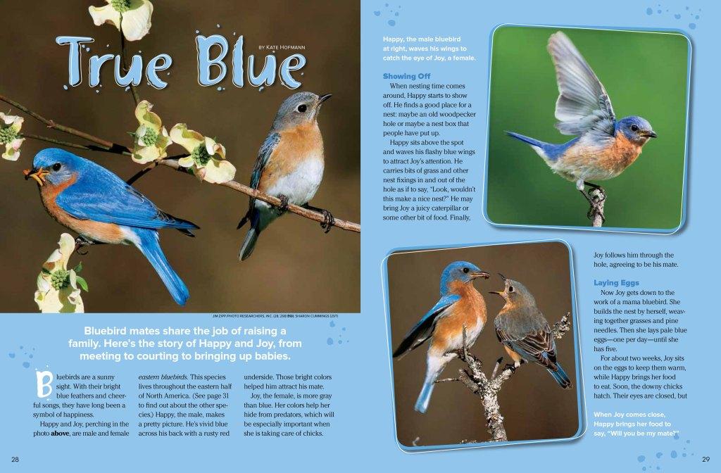 bluebird spread 1