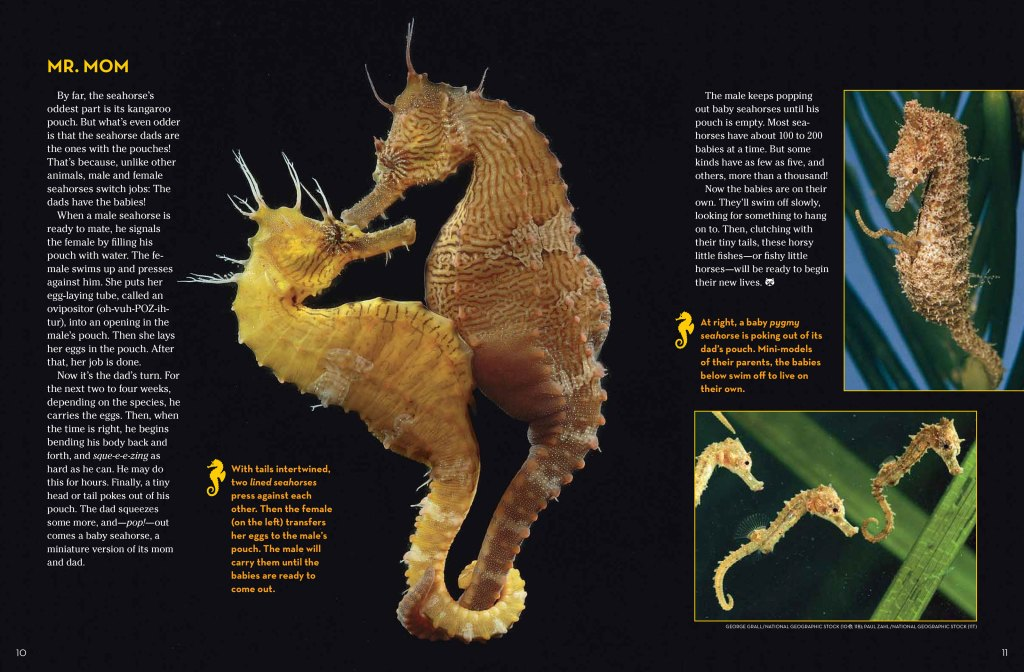 sea horse 3