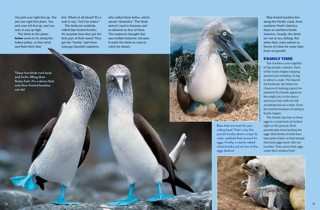 blue footed spread 2