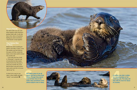 SeaOtter spread 3
