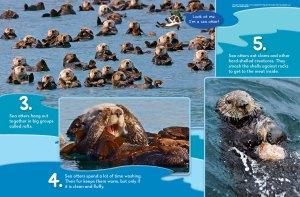 otter spread 2