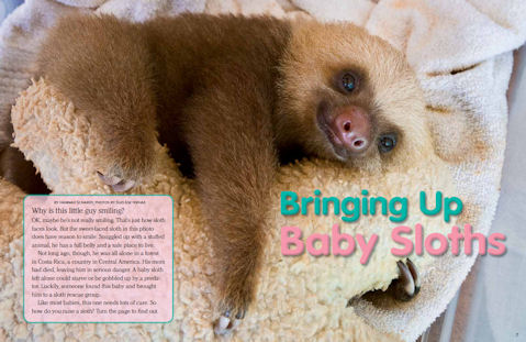 featured_sloths