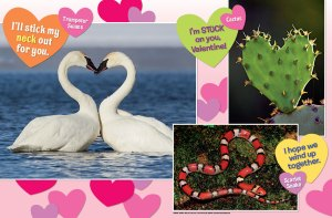 wild hearts spread 2