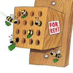 bee block