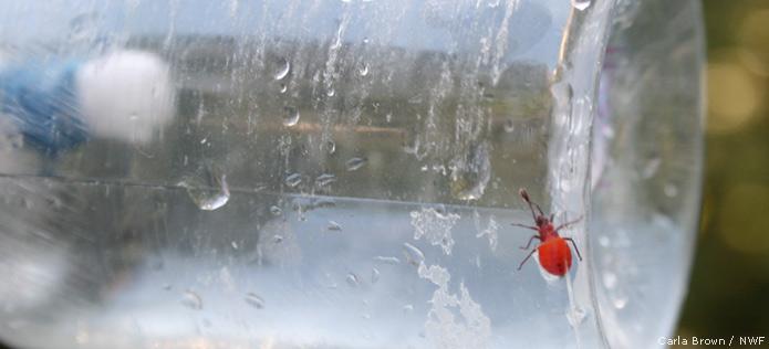 bug in bottle