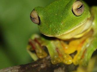 featured frog unsplash