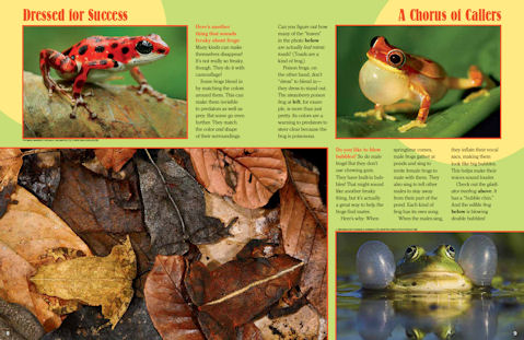frog spread 2
