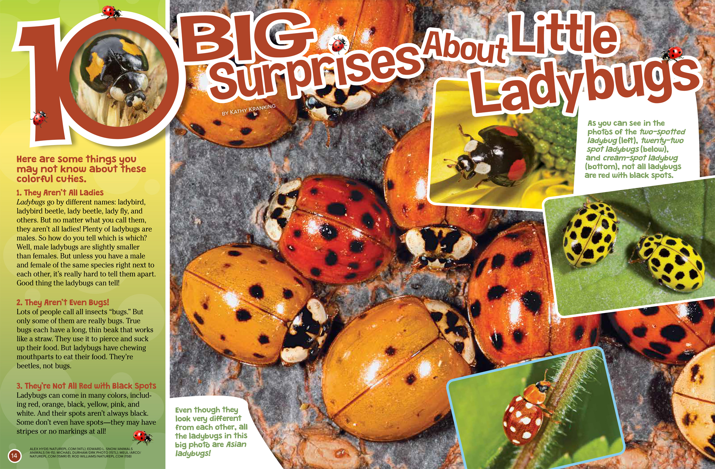 10 Big Surprises About Ladybugs - NWF | Ranger Rick