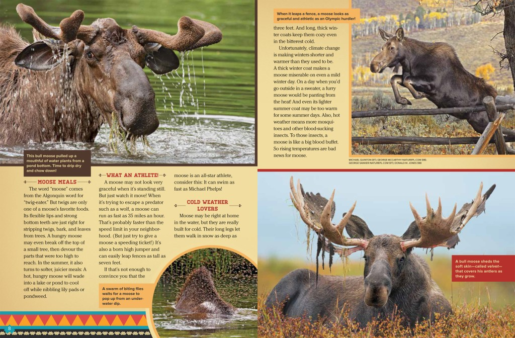 Moose Among Us Aug 2018 RR-2