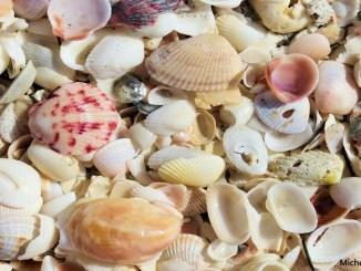 shells 1156x650 Michele Reyzer