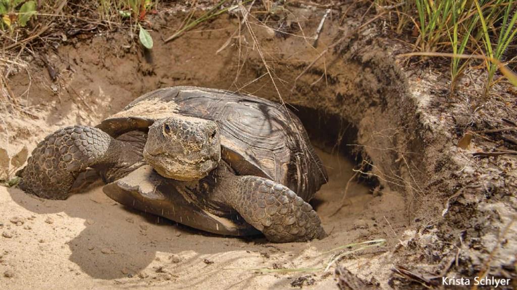 Underground Tortoise Town