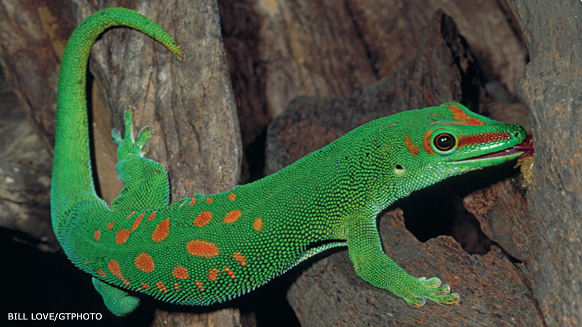 8 Great Gecko Surprises