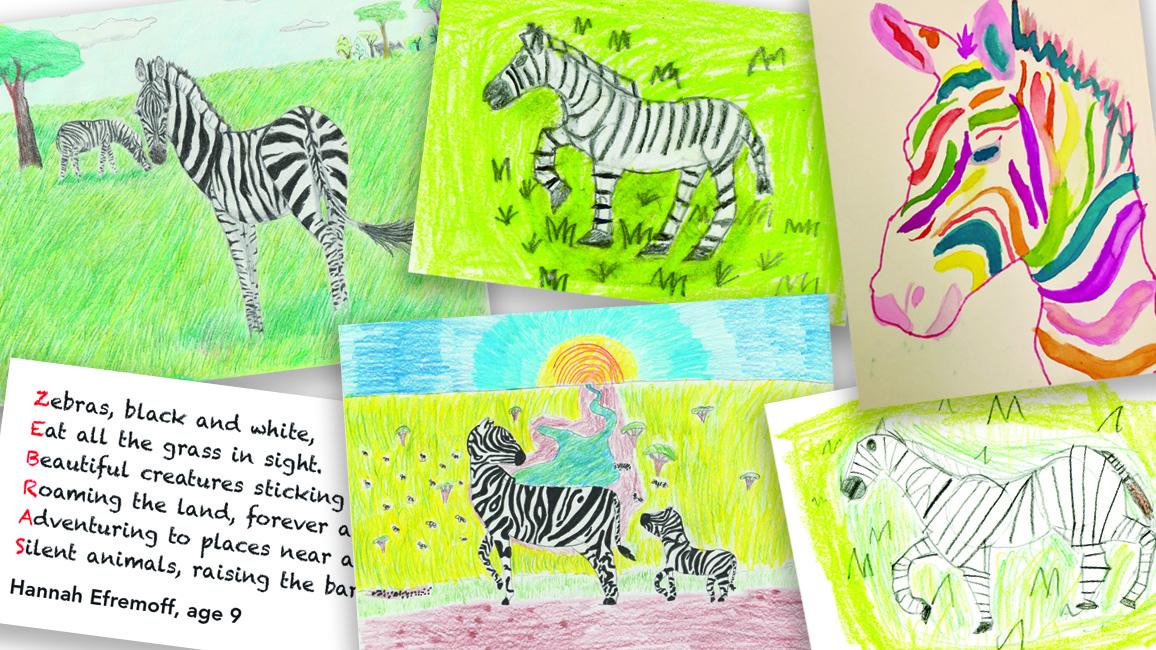 Zooworks Zebras