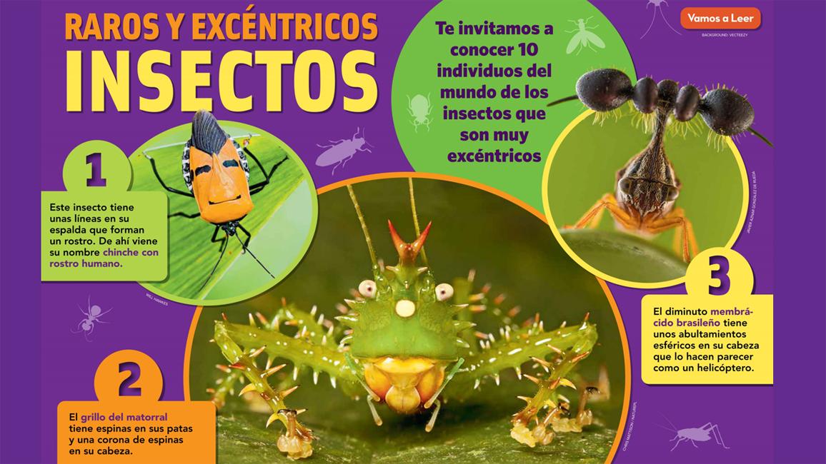 Raros y Excéntricos Insectos