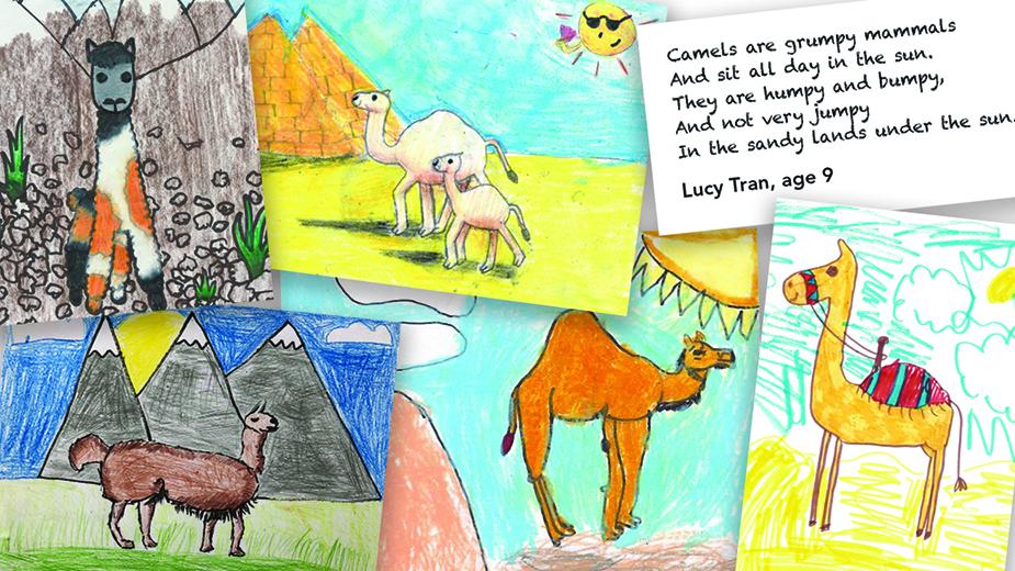 Zooworks Camels