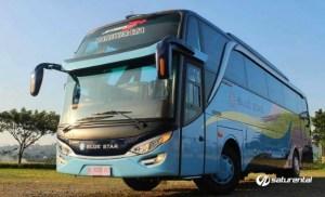 Bus Pariwisata Blue Star