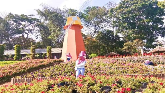 Wisata Semarang Taman Bunga Celosia