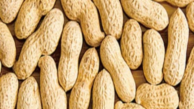 Kacang mirasa