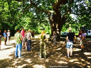 Under the Gilwell Oak