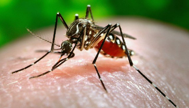 Expert advice not to panic about dengue