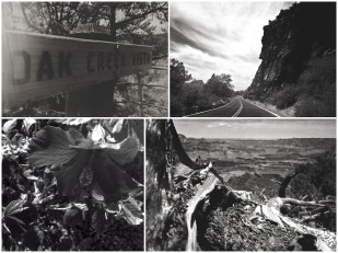 On our way back, we took a small deviation to see Oak Creek Canyon, yet another canyon housed around a small city called Sedona. A couple of days after we returned, there was a forest fire that soured the canyons.