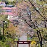 番外編(桜めぐり2012 本輪西神社)