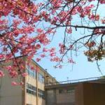 番外編(桜めぐり 天沢小学校)