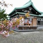 番外編 桜めぐり2008 (室蘭八幡宮)