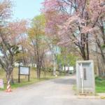 桜めぐり 2008 (チマイベツ浄水場)