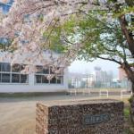 番外編 桜めぐり2008 (向陽中学校)