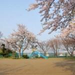 番外編 桜めぐり2008 (海岸町3丁目公園)