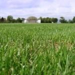 入江運動公園の芝生