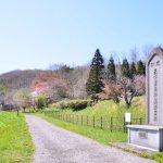 桜めぐり 2016 (南部陣屋史跡)