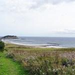 イタンキ浜とエゾノコンギク 2021