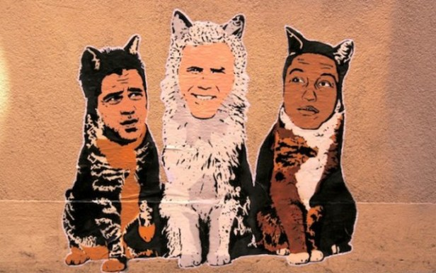 Lee County's provision does not include ferrell or pharell cats.