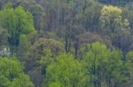 Shenandoah Valley Panoramic V-I (1:1 detail)