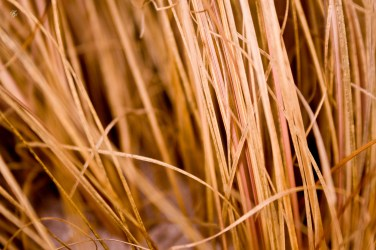 Dry straw, abstract. National Arboretum, Washington, DC, USA.
