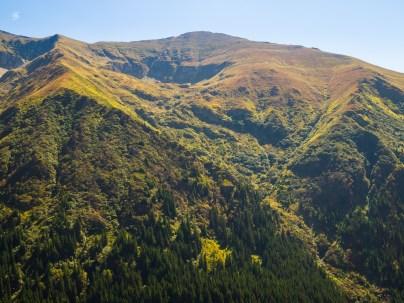 Evergreen slope