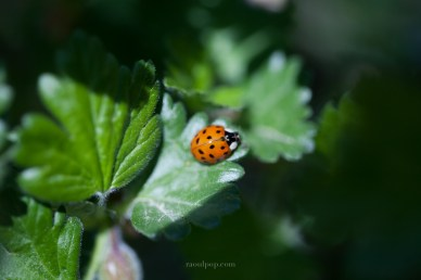 A ladybug